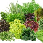 Ешь и худей: зеленая диета. Вариант разгрузочного меню.
